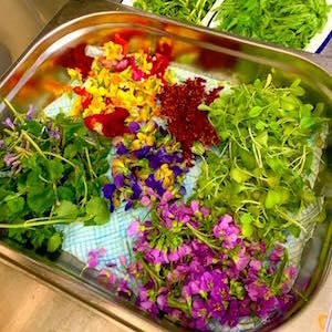 Taynuilt Hotel polytunnel herbs and garnish